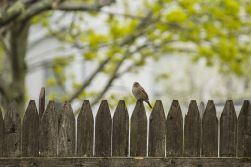 Fence with bird