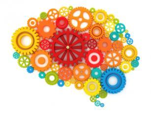 brain development in child